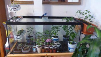 Cultivo en terrazas... dentro de un acuario